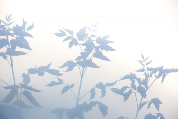 Resumen sombra gris de hojas naturales en textura blanca