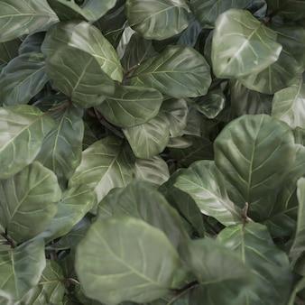 Resumen textura y fondo de hoja verde tropical., modelo 3d e ilustración.