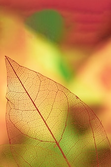 Resumen venas foliares con amarillo