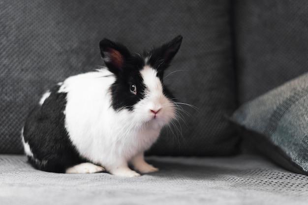 Retrato de adorable conejo