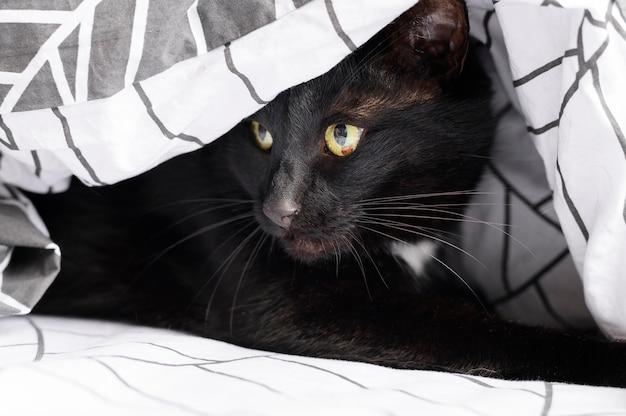 Retrato de adorable gato peludo en casa