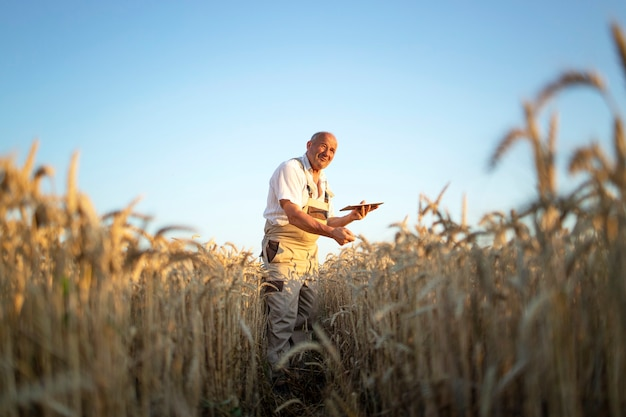 Retrato de agrónomo agricultor senior en campo de trigo comprobando cultivos antes de la cosecha y sosteniendo tablet pc
