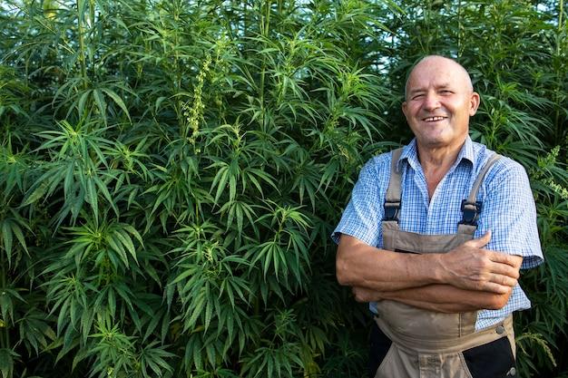 Retrato de agrónomo senior de pie por campo de cáñamo o cannabis