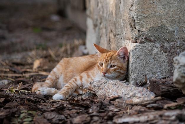 Un retrato al aire libre lindo gatito rojo. gato descansando.