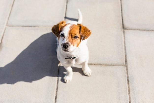 Retrato al aire libre de lindo perrito joven. soleado. concepto de amor por los animales