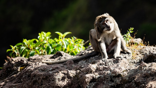 Retrato de un animal. mono salvaje. bali. indonesia