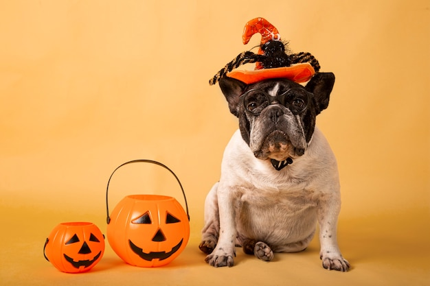 Retrato de bulldog francés con sombrero de halloween y calabaza en colores pastel