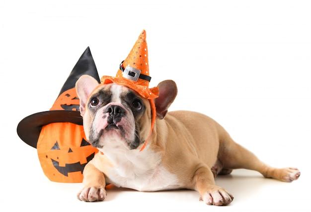 Retrato de bulldog francés con sombrero de halloween