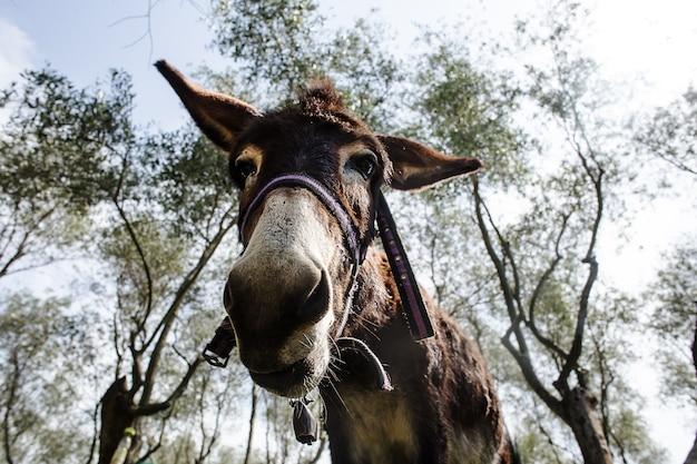 Retrato de burro divertido en un paisaje natural