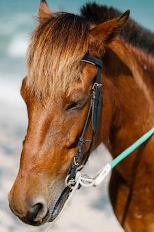 Retrato de cara de caballo