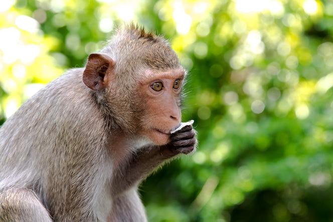 Retrato de mono lindo