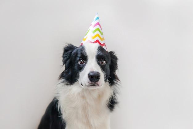 Retrato divertido del lindo border collie sonriente del perro de perrito que lleva el sombrero tonto del cumpleaños que mira la cámara aislada en la pared blanca. concepto de fiesta de feliz cumpleaños divertidas mascotas animales vida.