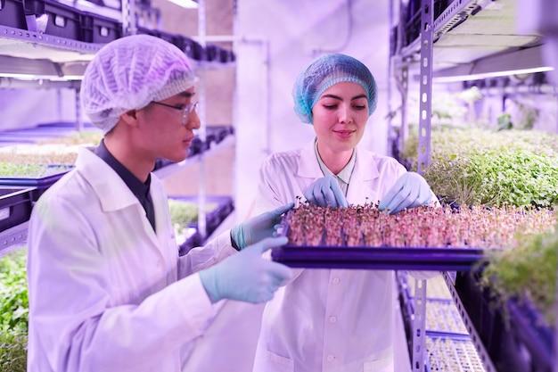 Retrato de dos jóvenes trabajadores arreglando bandejas en invernadero de vivero, espacio de copia
