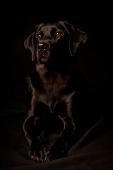 Retrato de estudio de un perro, aislado en un fondo negro