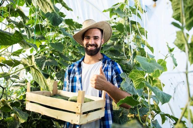 Retrato del exitoso joven agricultor barbudo sosteniendo los pulgares hacia arriba y la caja llena de pepinos frescos en invernadero
