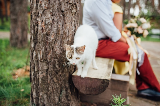 Retrato de gata embarazada caminando en el banquillo