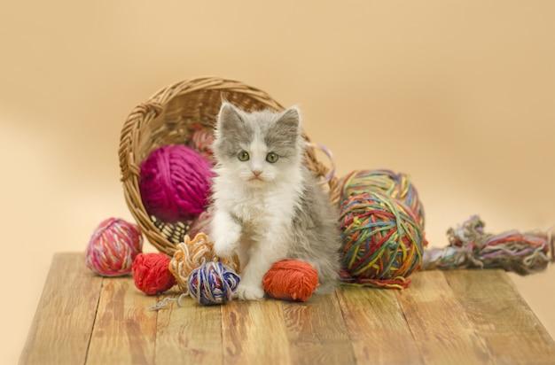 Retrato del gatito bonito gris lindo. gatito con bolas de lana.