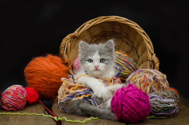Retrato del gatito bonito gris lindo. gatito divertido y tejer