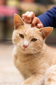 Retrato de un gato amarillo acariciado por la mano de un niño
