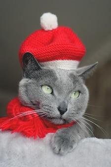 Retrato de un gato azul ruso con sombrero rojo y bufanda. concepto de humor navideño.