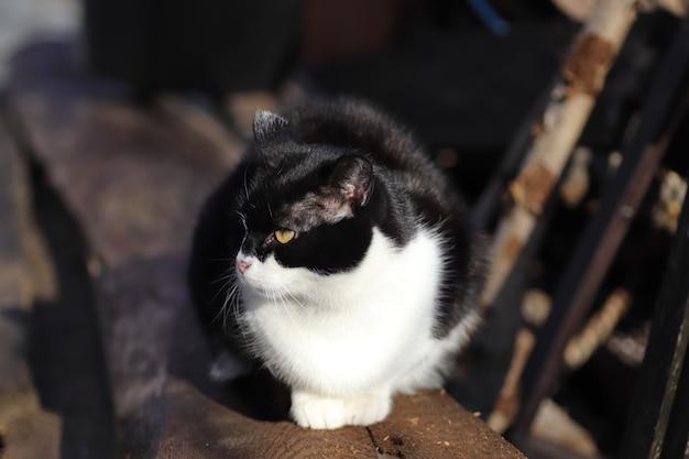 Retrato de un gato blanco y negro en un día soleado