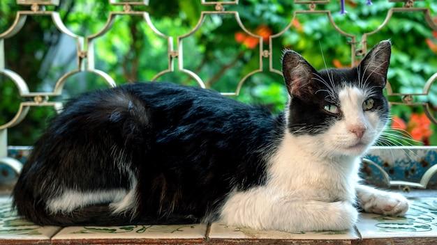 Retrato de gato doméstico en blanco y negro, que está con los ojos bien abiertos.