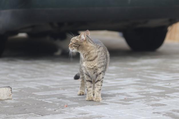 Retrato de un gato doméstico rayado posando en un día soleado al aire libre