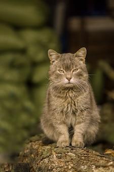 Retrato de un gato en la granja