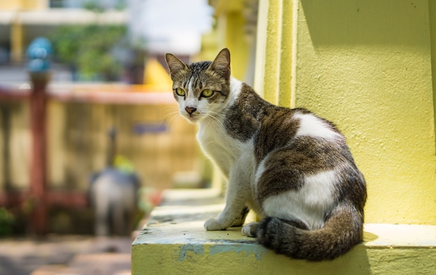 Retrato de gato gris-blanco