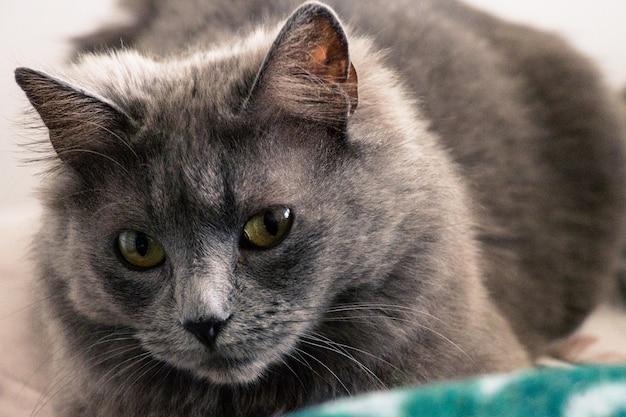 Retrato de gato hermoso
