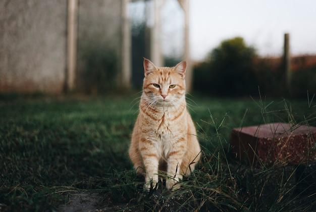Retrato de un gato