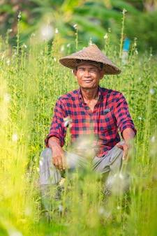 Retrato de un granjero asiático senior feliz en sesame garden.