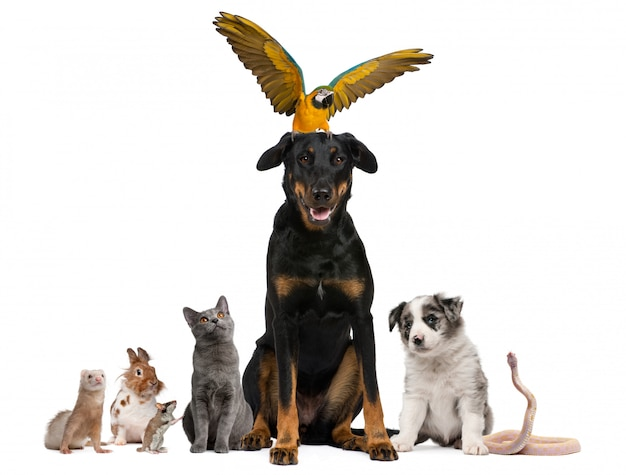 Retrato de grupo de mascotas delante de fondo blanco.