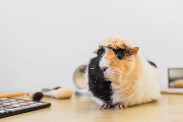 Retrato de guinea con productos cosméticos