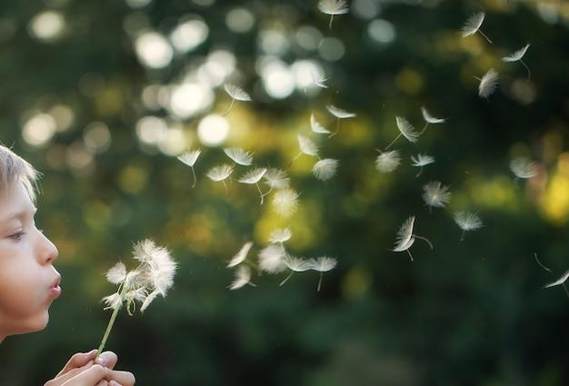 Retrato infantil al aire libre en la naturaleza que sopla un diente de león en la tarde soleada de verano.