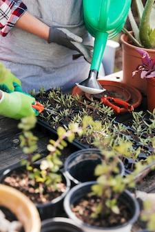 Retrato de jardinero regando y recortando las plántulas en la caja