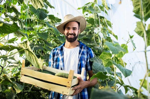 Retrato de joven agricultor barbudo con caja llena de pepinos frescos en invernadero