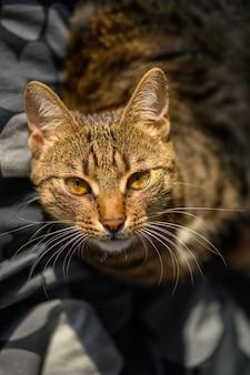 Retrato de joven gato europeo de pelo corto