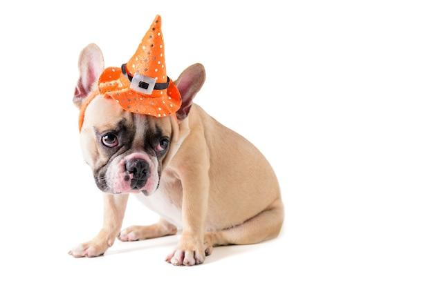 Retrato de lindo bulldog francés con sombrero halloween aislado