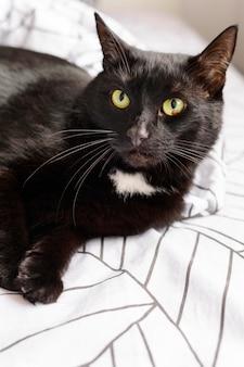 Retrato de lindo gatito peludo en casa