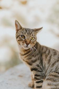 Retrato de un lindo gato doméstico adorable con hermosos ojos