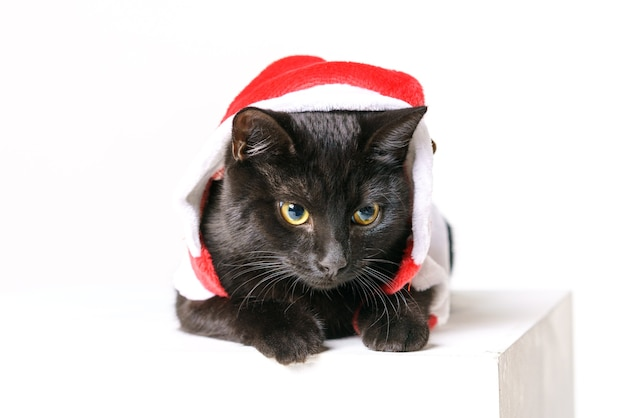 Retrato de un lindo gato negro feliz santa claus mira un fondo blanco mira con ojos amarillos festiv ...