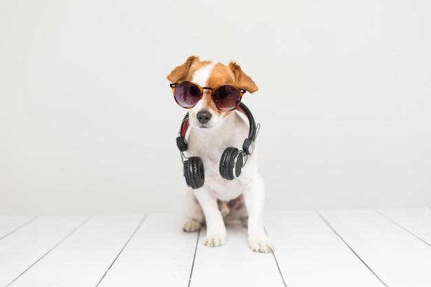 Retrato de un lindo perro pequeño sentado en el piso blanco y usando un auricular