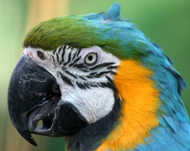 Retrato de loro de color en un zoológico