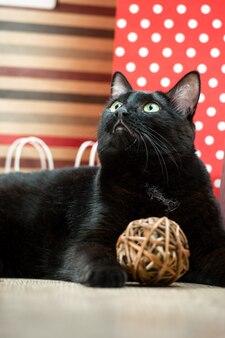 Retrato de una mascota de gato negro que miente cerca de las bolsas de papel rojas de compras