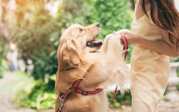 Retrato de mujer con perro golden retriever en el parque con puerta puesta de sol