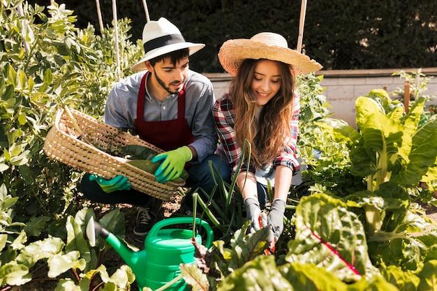 Retrato de los pares jovenes del jardinero de sexo masculino y de sexo femenino que trabajan en el jardín