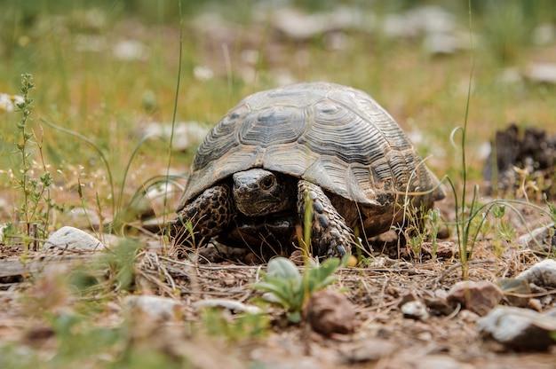 Retrato de una pequeña tortuga en el bosque