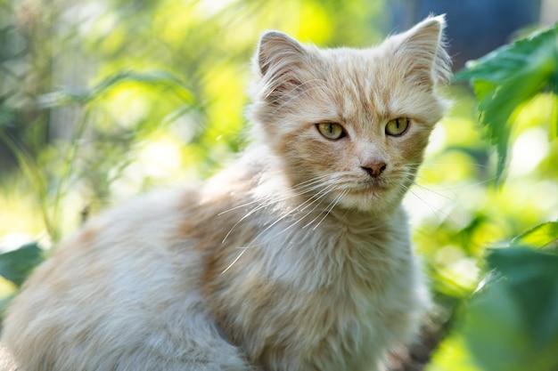Retrato de un pequeño gato amarillo sentado en la hierba verde en un día soleado.