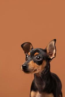Retrato de perro adorable en un estudio